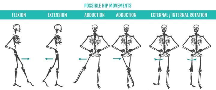 Anatomy Basics: Your Gluteus Maximus | Sustainable Exercise