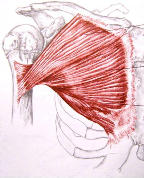 Anatomy Basics